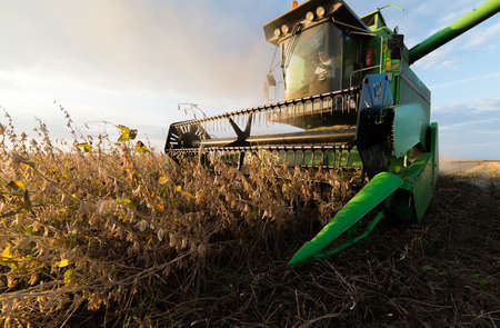Harvesting of soybean field with combine Stockfoto