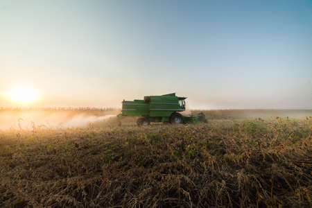monoculture: Harvesting of soybean field with combine Stock Photo
