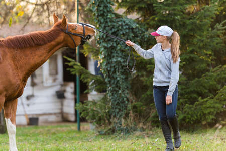 reins: Young pretty girl preparing horse for ride