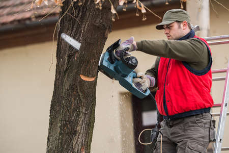 Young man cutting a branch with chainsaw in the yard Stock Photo