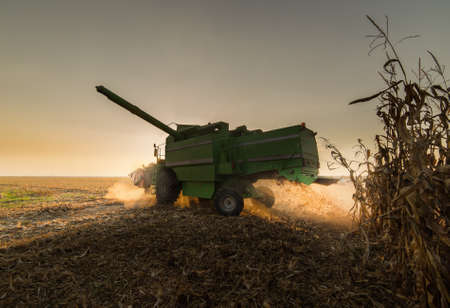 monoculture: Harvesting of corn field with combine in autumn