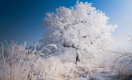 Lonely tree in winter landscape