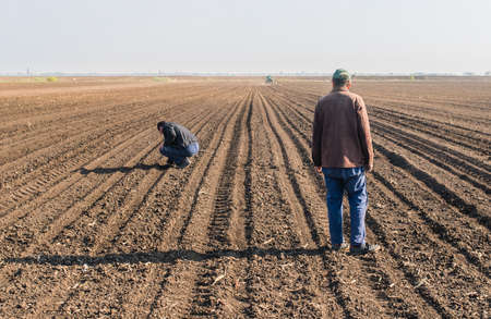 a crop: Farmers analyze soya seed after sowing crops at agricultural field in spring