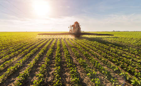 pesticides: Tractor spraying pesticides on soybean field  with sprayer at spring