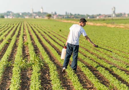 Joven, agricultor, Pulverización, soja, plantación, pesticida, campo Foto de archivo