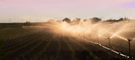 crop sprayer: Irrigation system watering a crop of soy beans at field