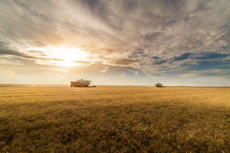 Harvesting of wheat field in summer Stock Photo