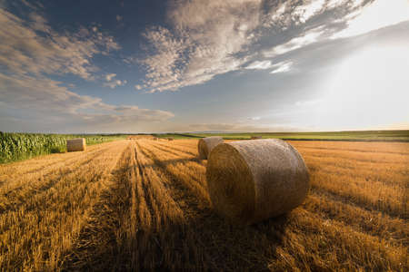 Beautiful landscape of agricultural wheat field - Round bundles of dry grass in the field,bales of hay Stock Photo
