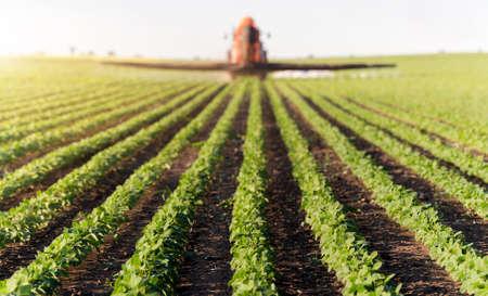 sorgo: Tractor spraying soybean field at spring Foto de archivo