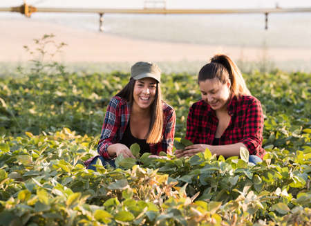 Two beautiful and young farmer girls examining crop of soy bean in field during summer Stock Photo
