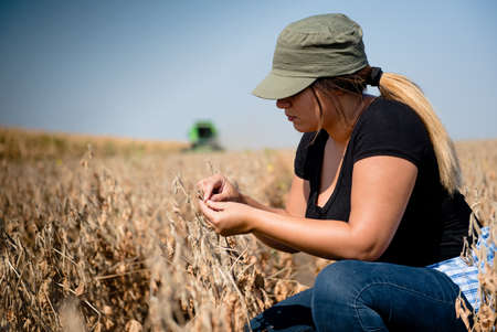 Young farmer girl examing soybean plant during harvest  Stock Photo
