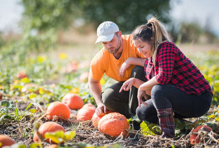 Two young farmers picking pumpkins for harvest at field - Thanksgiving and Halloween preparation Stock Photo