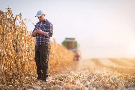 Young farmer examine corn seed in corn fields during harvest
