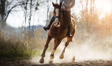 Jeune jolie fille chevauchant un cheval Banque d'images - 95297546