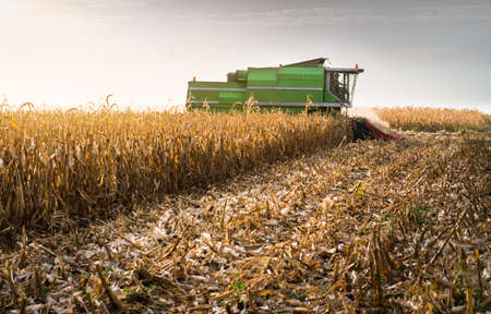 Harvesting of corn field with combine in late summer Stock Photo
