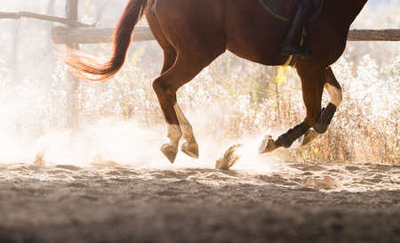 A horse riding in the autumn Stock Photo - 96999974
