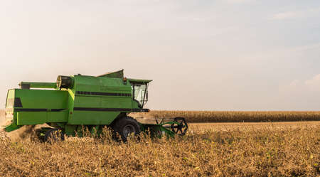 Harvesting of soybean field with combine in late summer