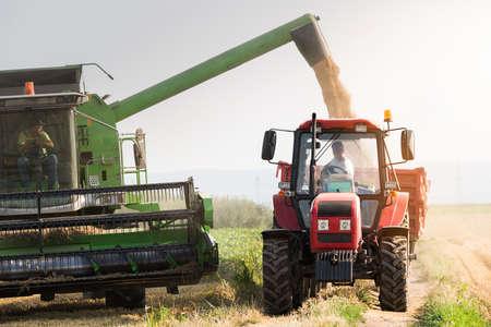 Gieten van sojabonen graan in trekker oplegger na oogst op veld