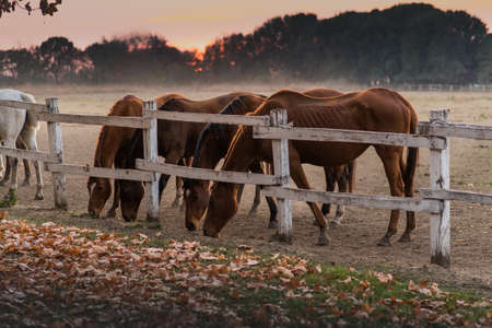 Group of beautiful horses in the nature