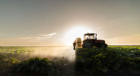 Farmer on a tractor with a sprayer makes fertilizer for young vegetables Stock Photo
