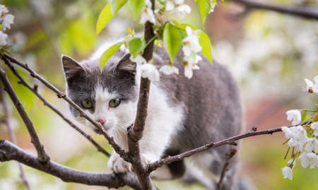 Fluffy cat sitting on a tree