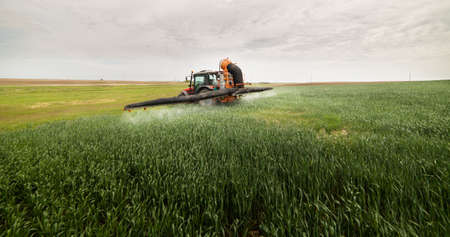 Tractor rociando pesticidas en campos de trigo
