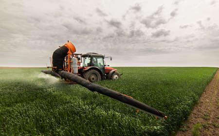 Tractor rociando pesticidas en campos de trigo Foto de archivo