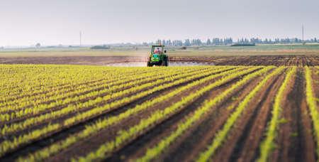 Tractor sproeien van pesticiden op maïsvelden