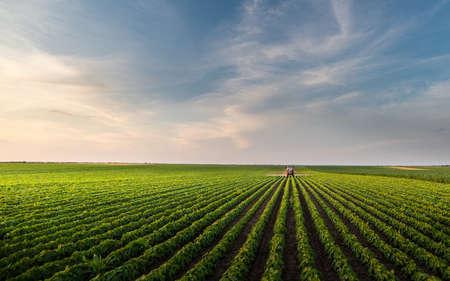 Tractor spraying soybean field in sunset. Season, plant.
