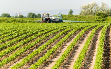 Tractor rociando pesticidas en campo de soja con rociador en primavera