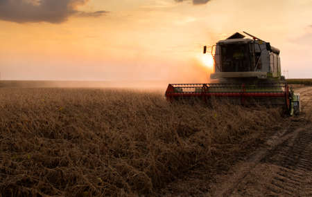 A combine harvesting soybeans at sunset
