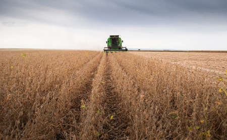 A combine harvesting soybeans at autumn