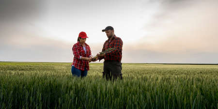 Young farmers examing planted young  wheat in spring Stock Photo