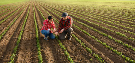 Young farmers examing planted young soy in spring Stock Photo