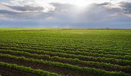 Image of rain-laden clouds arriving over a large soy plantation