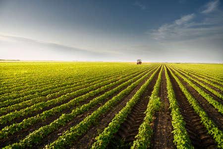 Tracteur pulvérisant des pesticides sur un champ de soja avec un pulvérisateur au printemps Banque d'images