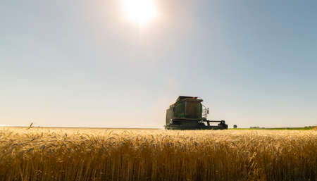 Harvesting of wheat field in summer Imagens