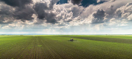 Tractor spraying pesticides on soy field with sprayer at spring Foto de archivo