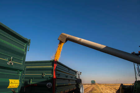 Grain auger of combine pouring corn into tractor trailer Stok Fotoğraf