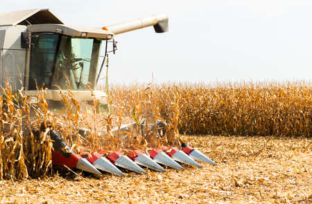 Combine Operator Harvesting Corn on the Field in Sunny Day.