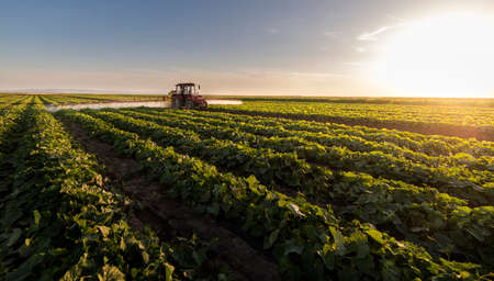 Tractor spraying pesticides on vegetable field  with sprayer at spring Stok Fotoğraf - 159596860