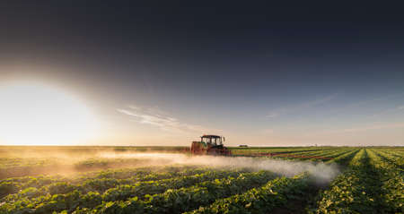 Tractor spraying pesticides on vegetable field  with sprayer at spring