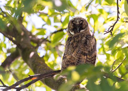 beautiful owl in nature forest habitat.