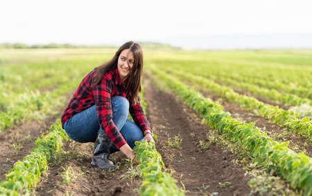 Female farmer or agronomist examining green soybean plants in field