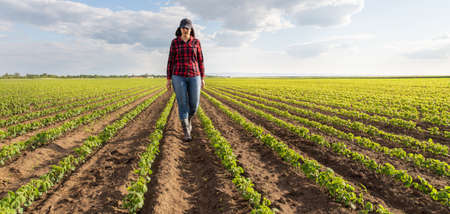 Female farmer or agronomist examining green soybean plants in field Stock Photo