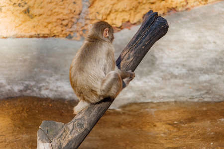 Young monkey sitting on an old log