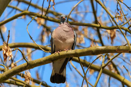 Wild dove on a tree branch on a sunny spring day Banque d'images
