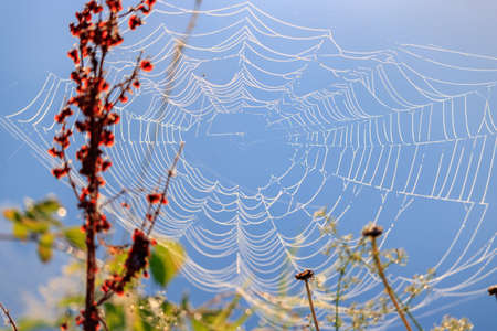Spider web with dew drops on a background of plants against blue sky Stock Photo