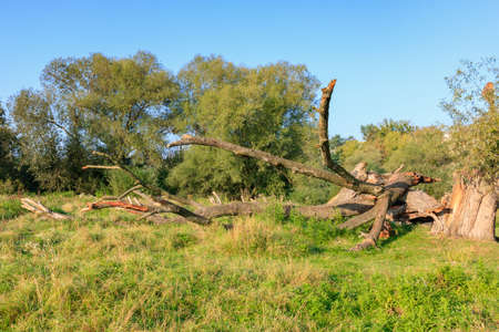 Trunk of fallen old dry tree on the river bank against green trees and blue sky in sunny autumn morning. Nature landscape