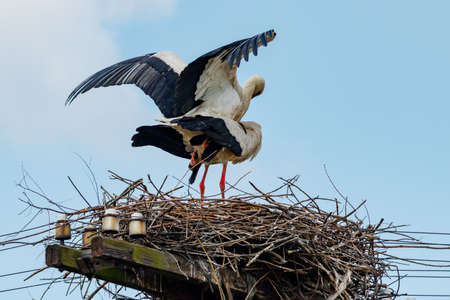 Storks in the nest during the mating period Banque d'images - 131337969